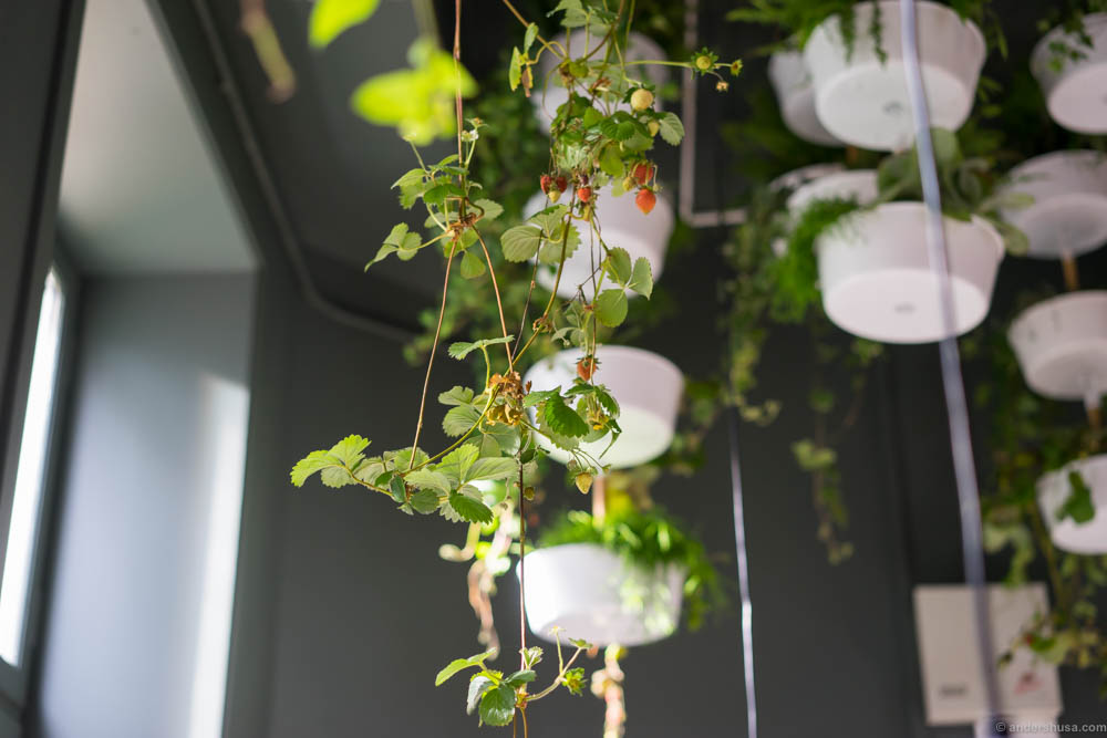 Plants in the ceiling