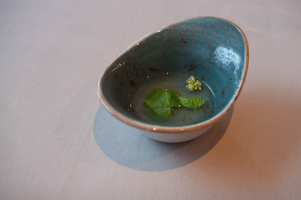 The amuse-bouche. Pike perch stock flavored with blackcurrant leafs