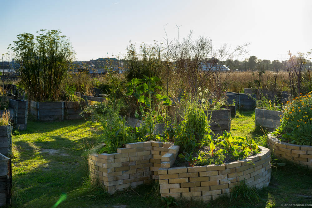 In the gardens of Amass they grow a lot of the herbs, flowers and vegetables they need