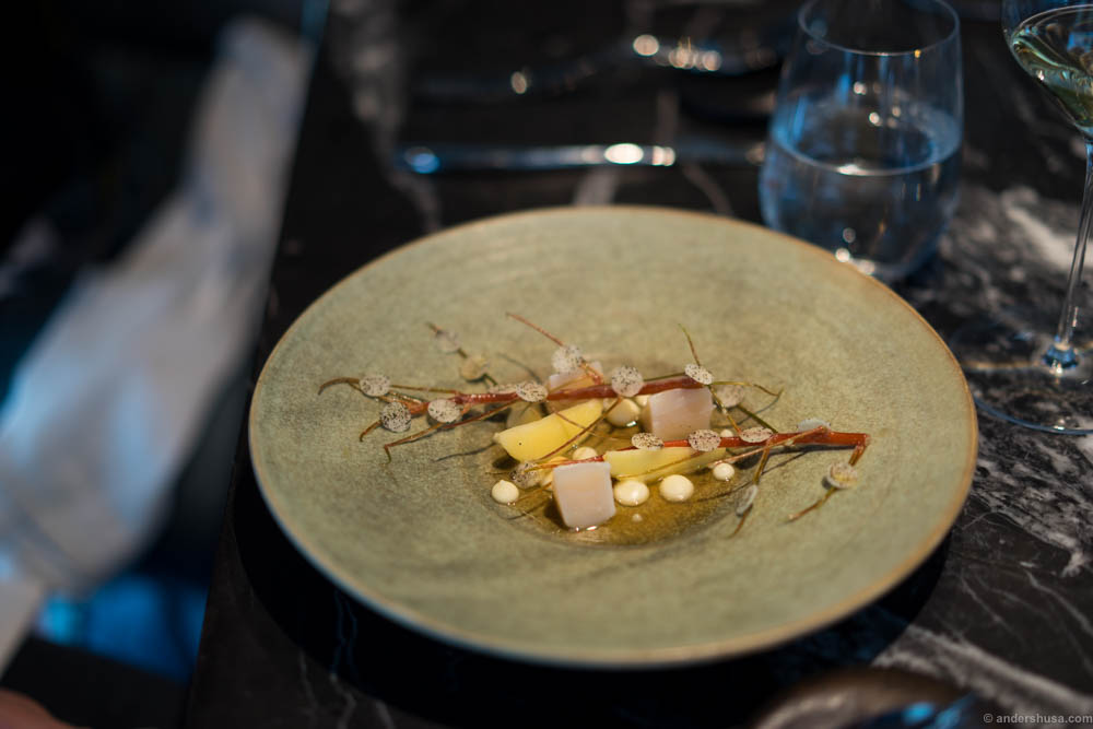 Scallops from Frøya grilled in their own shell, winter apples and celeriac