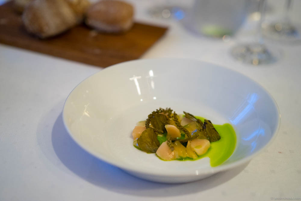 "Raw scallops with ""søl"" gel, pickled sea plantain and fried fermented crambe cabbage"
