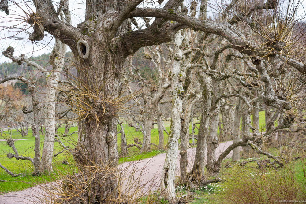 Bewitched trees