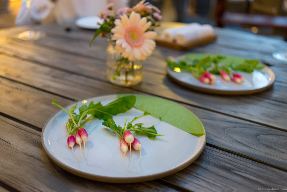Radish with oyster and herb emulsion