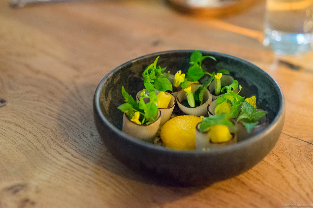 Confit egg yolk, burnt shallots, primula flower and yeast & ramson oil
