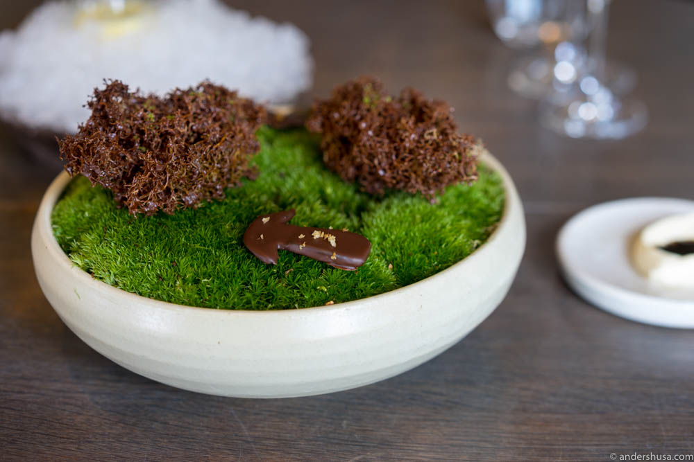 Moss and cep mushroom sprayed with chocolate