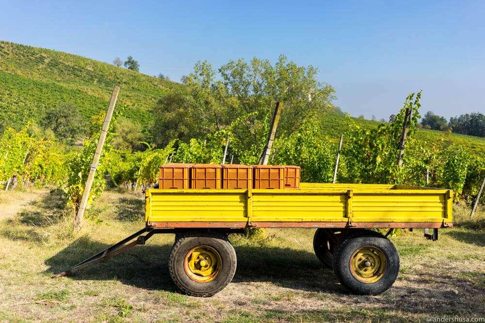 The Lamoretti winery