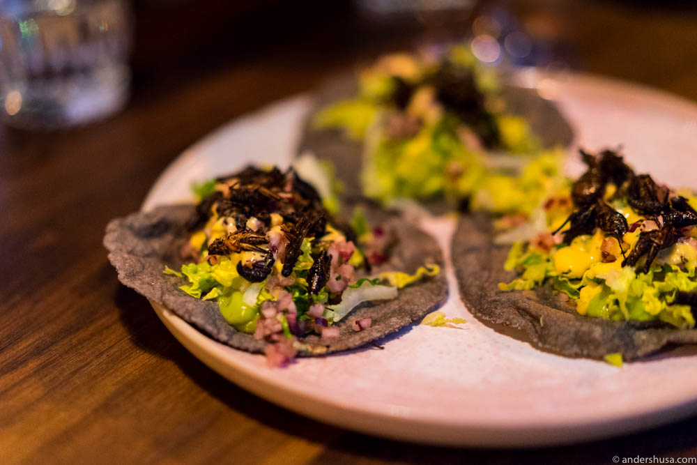 Blue corn tortillas with avocado and chapulines (grasshoppers)