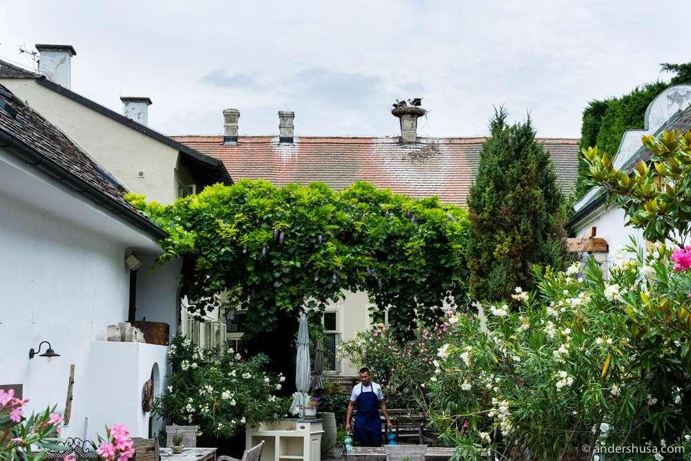 Storks on the rooftop of Gut Oggau