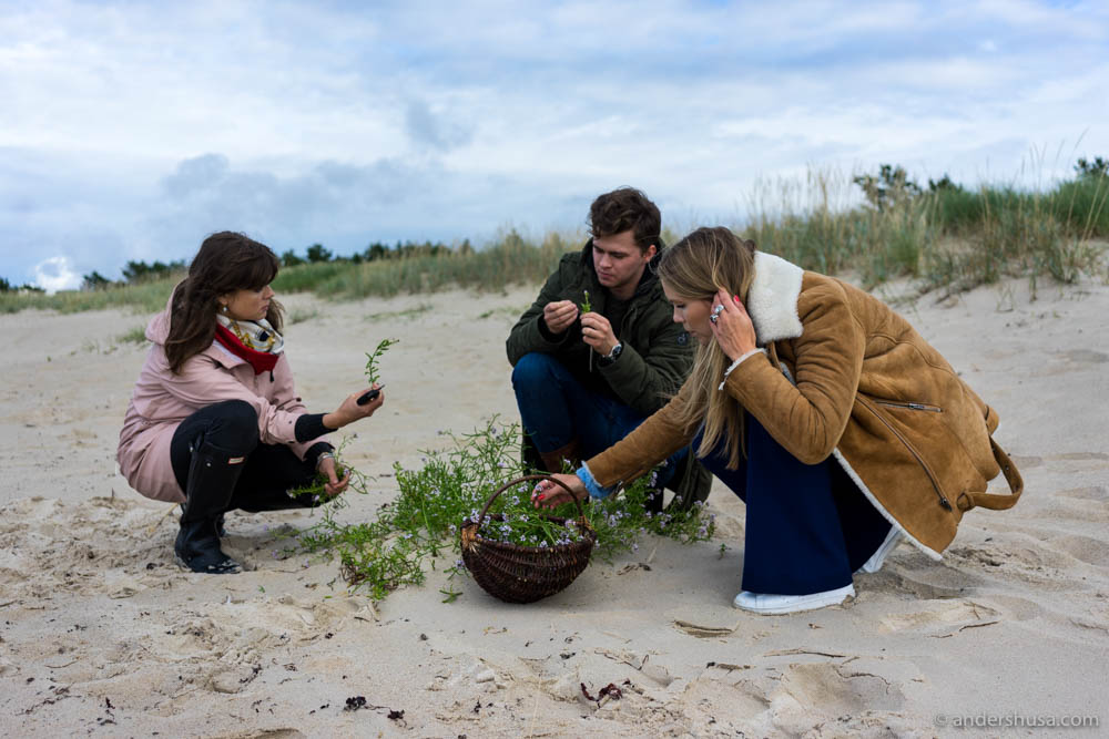 Hedda helps Orm and Maret to pick beach plants