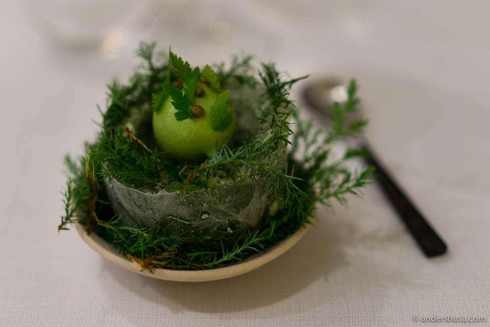Juniper berries, pine cones, gooseberries & black currants