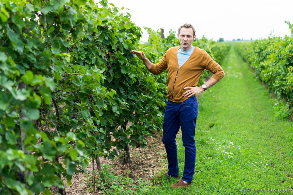 Biodynamic winemaker Werner Michlits in one of the vineyards of Meinklang