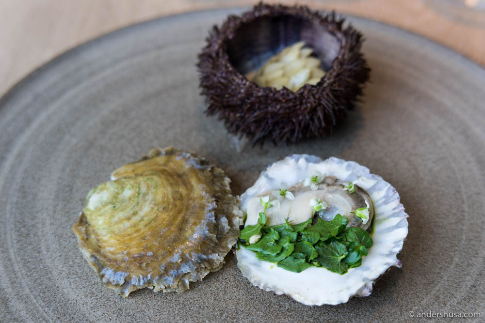 Danish oyster from Limfjorden, poached and served with wasabi leaves and flowers from Iceland.