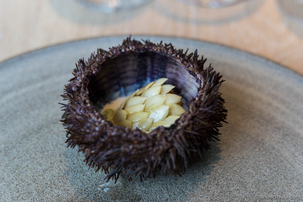 Faroe Islands sea urchin with cream, pumpkin seeds and rose oil