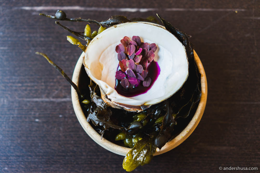 Mahogany clam with fermented red cabbage & nettle vinegar