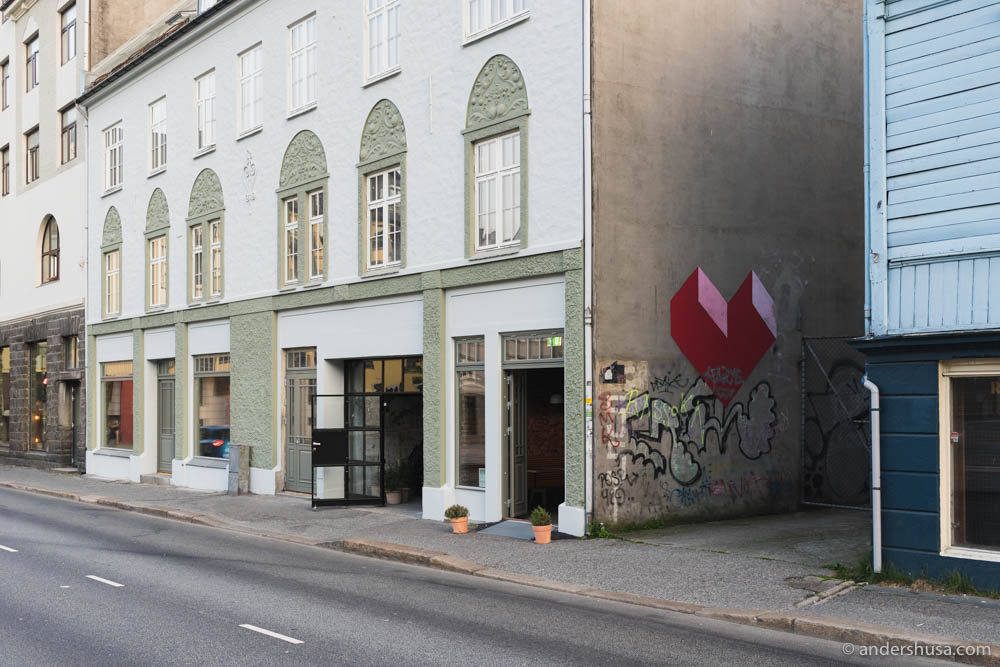 Hoggorm in Bergen