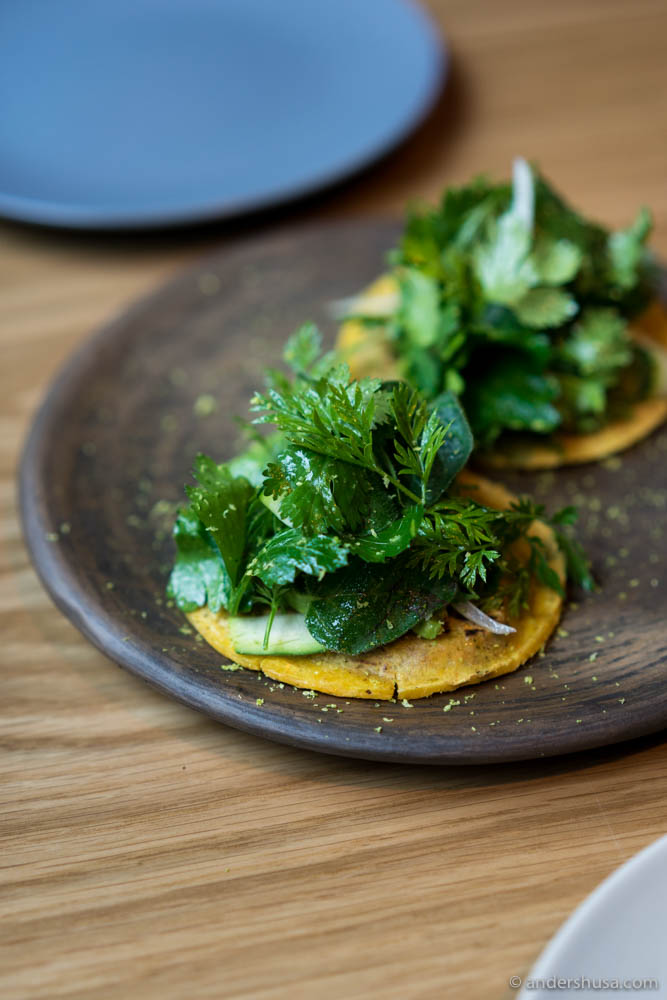 Tortillas filled with dzikilpak (pumpkin seed paste) and topped with greens