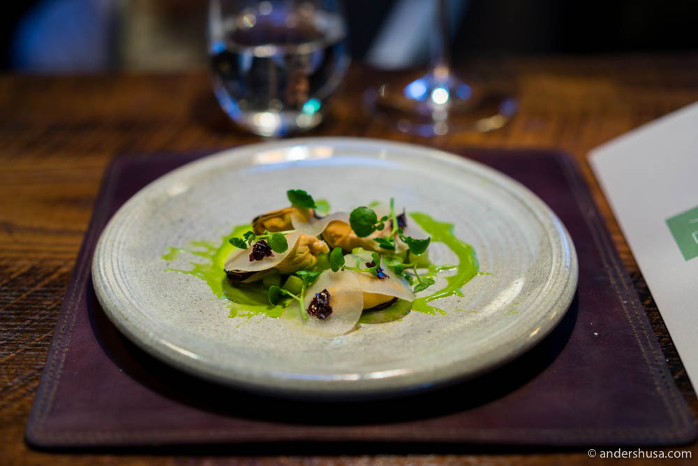 Pickled celeriac, Icelandic mussels, salted cucumbers, yogurt, watercress, and dulse (söl)