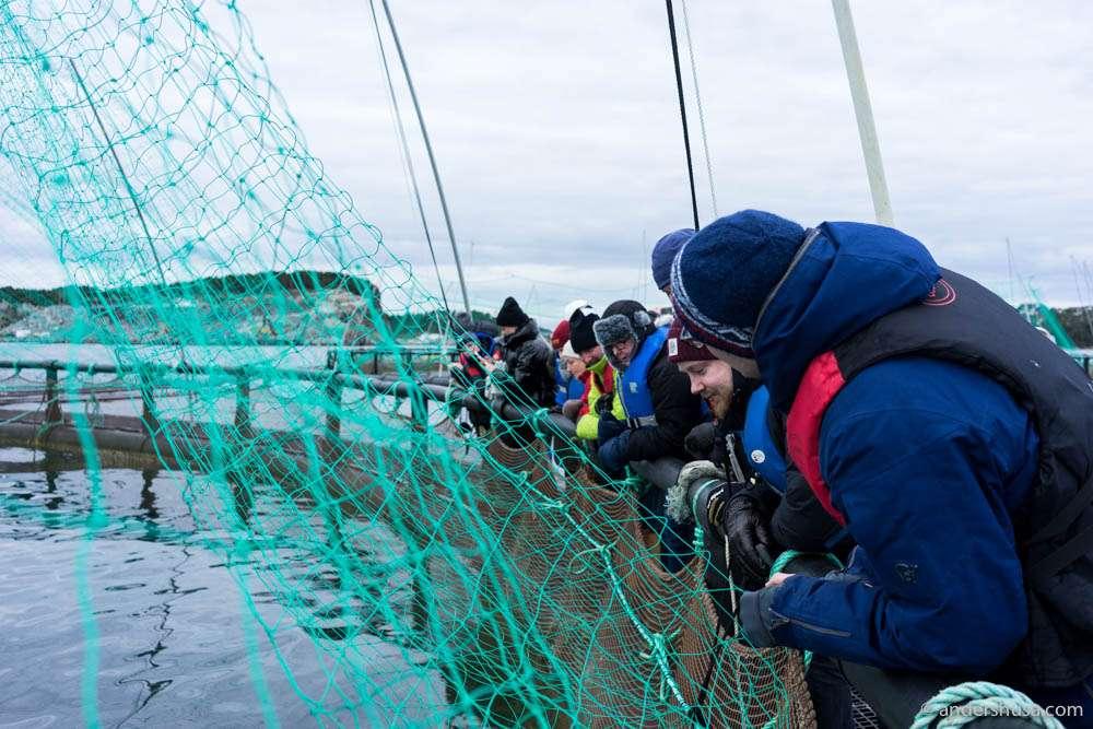Inspecting the aquacultures