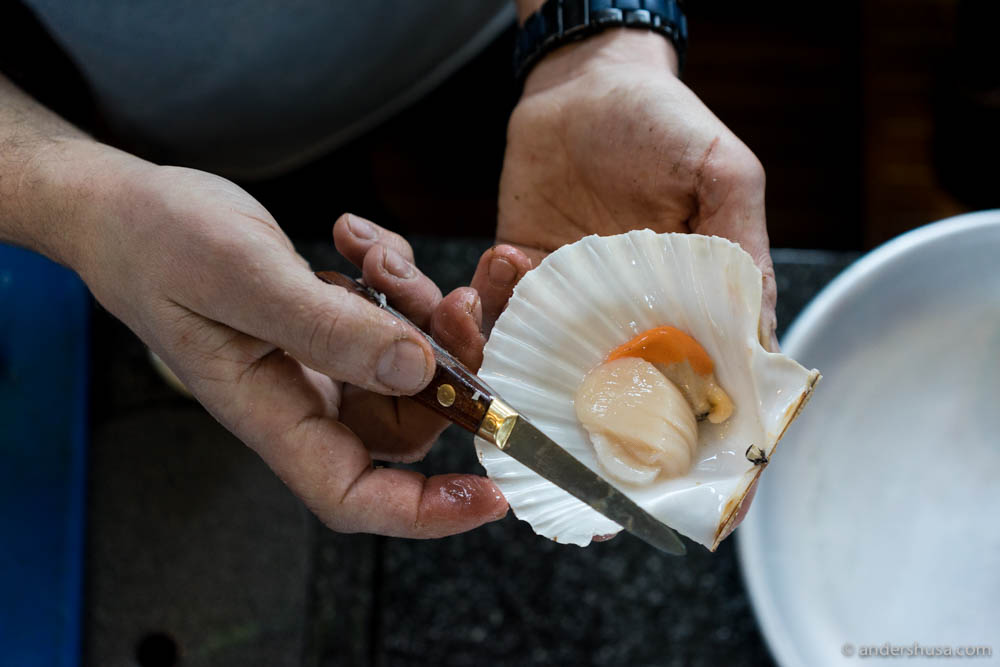 The scallop and its roe