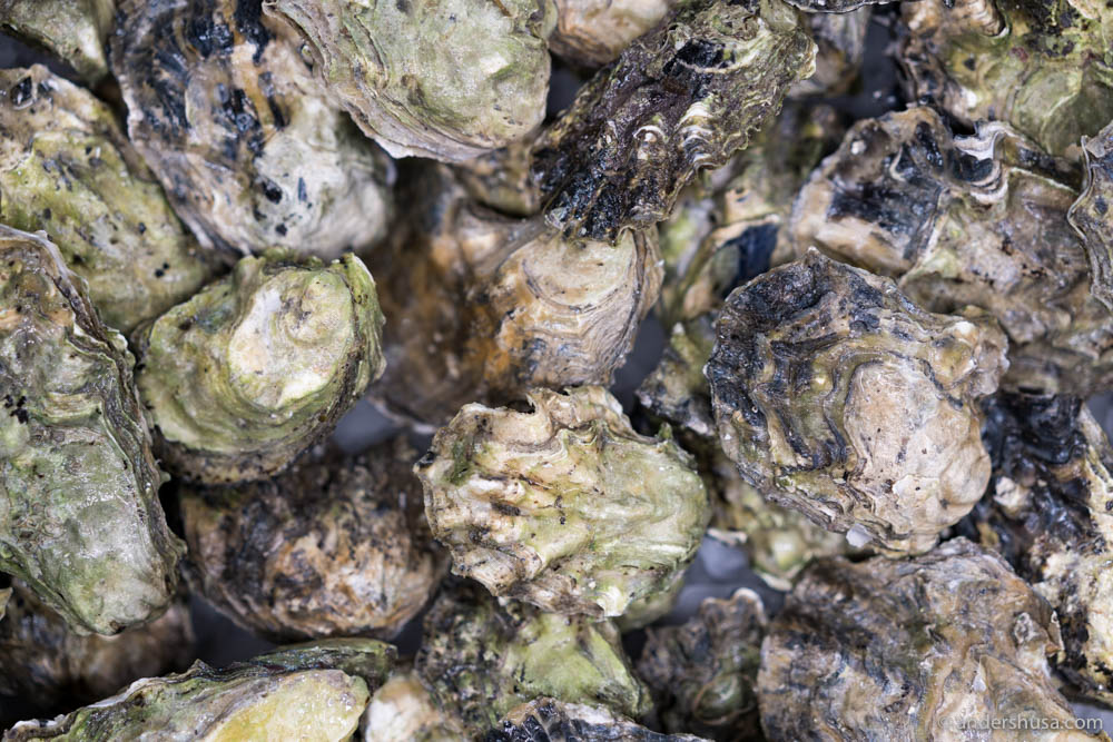 Oysters from Norwegian Shores
