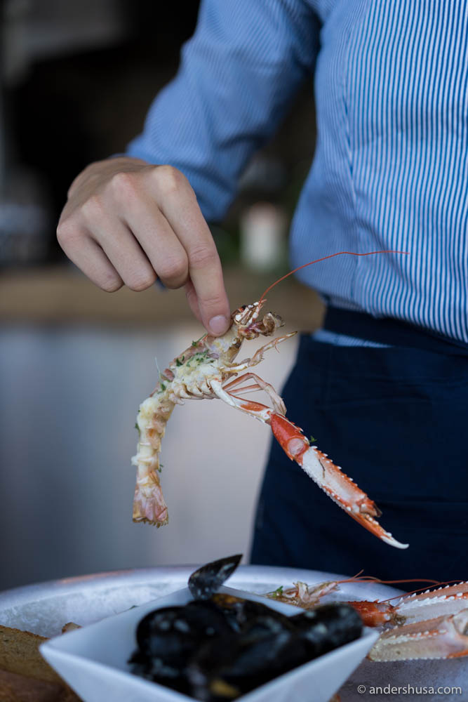 A little langoustine
