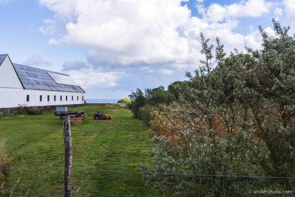 Fløjlegård – the farm where Camilla and Mads grow their sea buckthorn bushes.