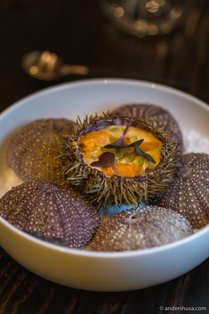 Sea urchin, sea buckthorn, and celery.
