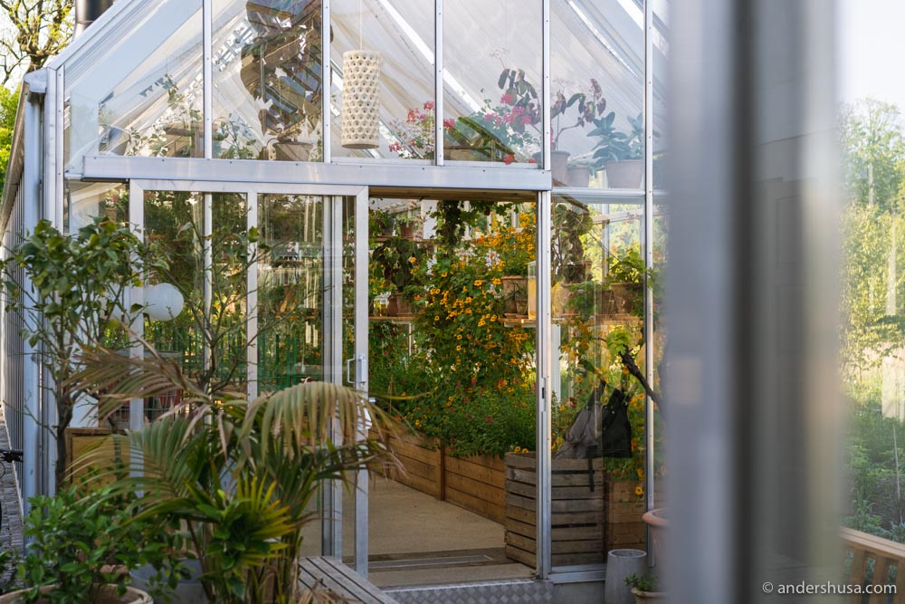 If it rains, you can sit inside the Noma greenhouses.
