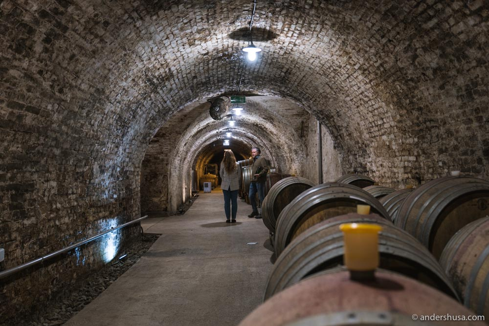 In the cellar of Fred Loimer, who has been making biodynamic wine since the early 2000s.
